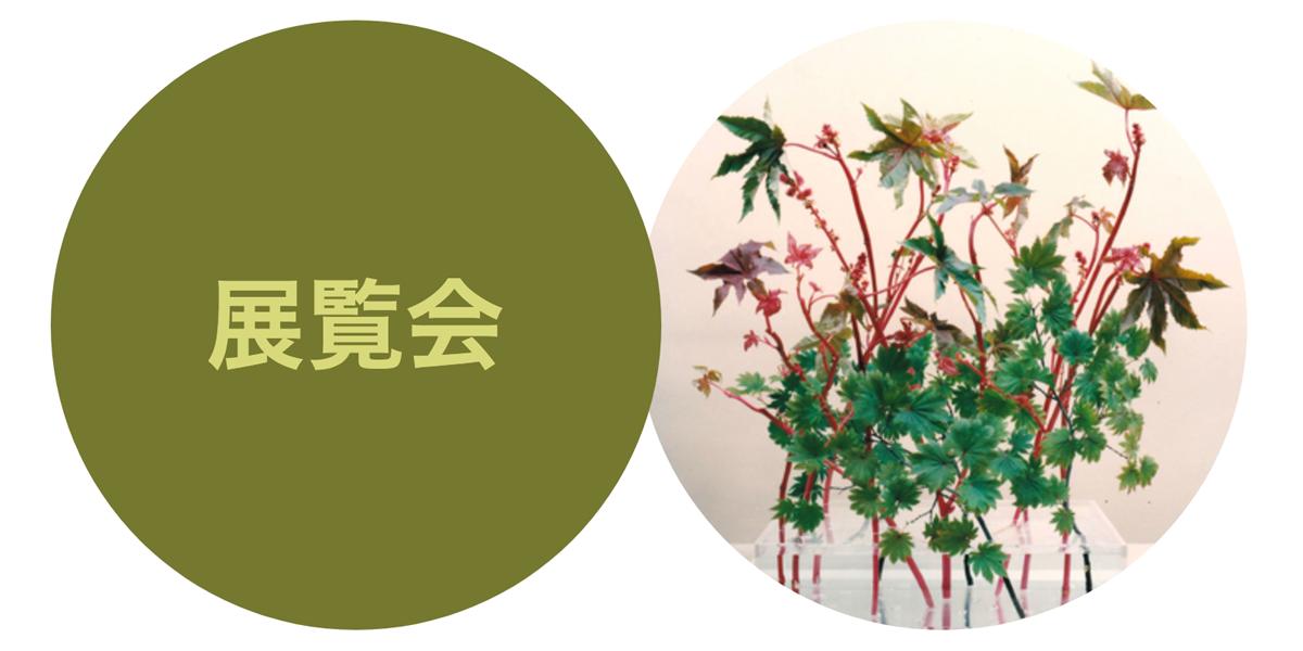 maison-de-la-culture-du-japon-exposition-d-ikebana